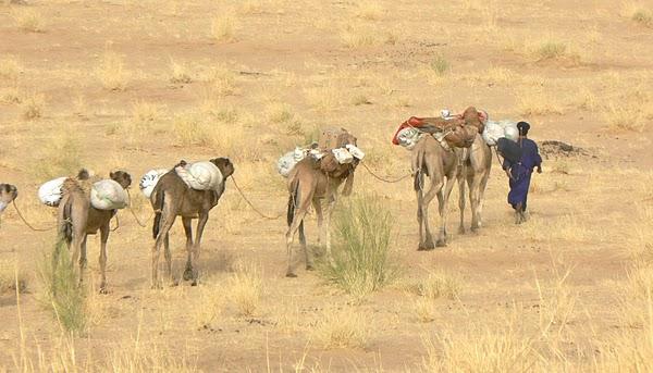 Beautiful Photo Of Camel Caravan