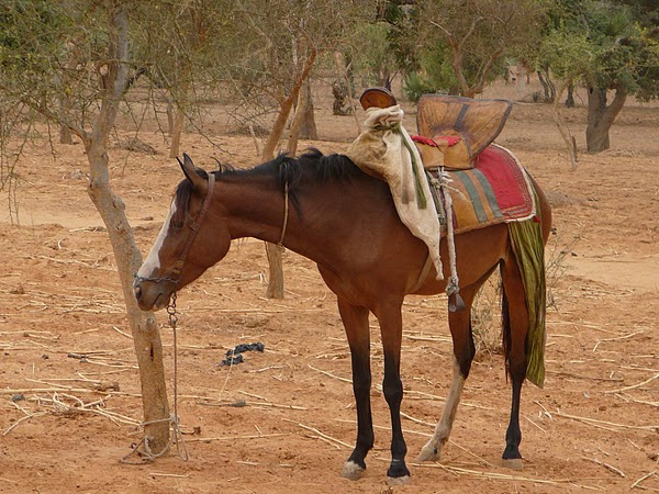 Ndalama African Deserts Crafts Dogon Country Pays Dogon